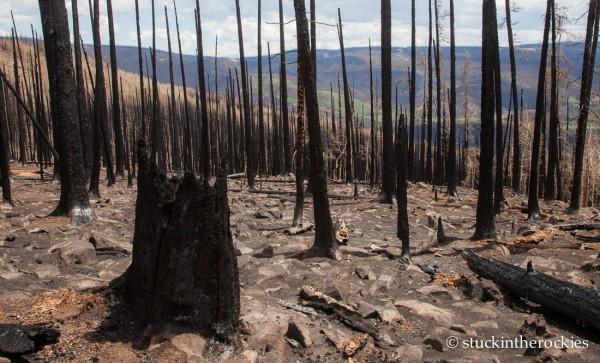 West Fork Complex Wildfire01