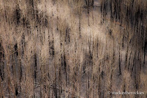 West Fork Complex Wildfire03