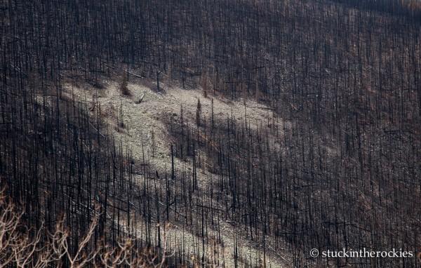 West Fork Complex Wildfire07