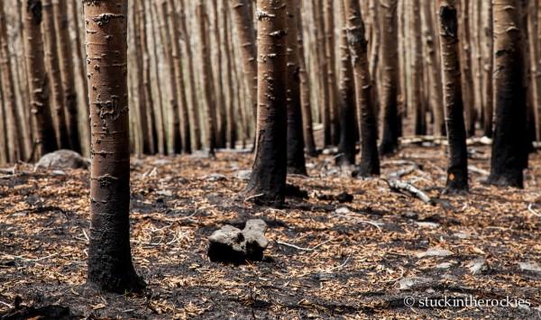 West Fork Complex Wildfire08