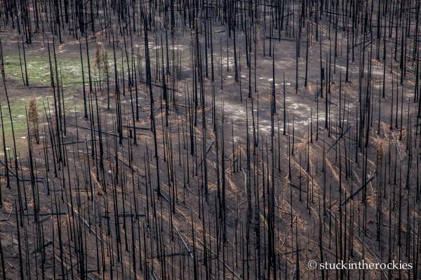 West Fork Complex Wildfire11