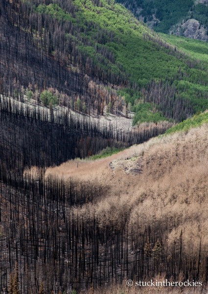 West Fork Complex Wildfire12