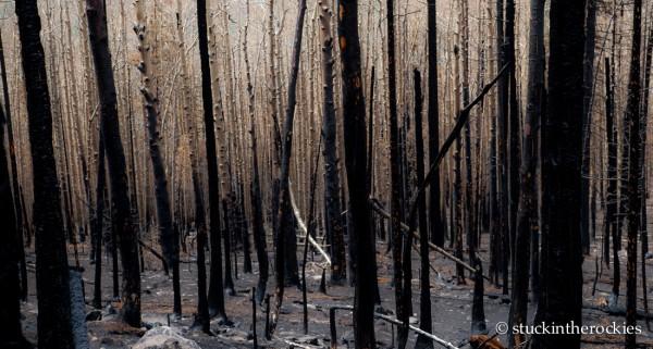 West Fork Complex Wildfire13