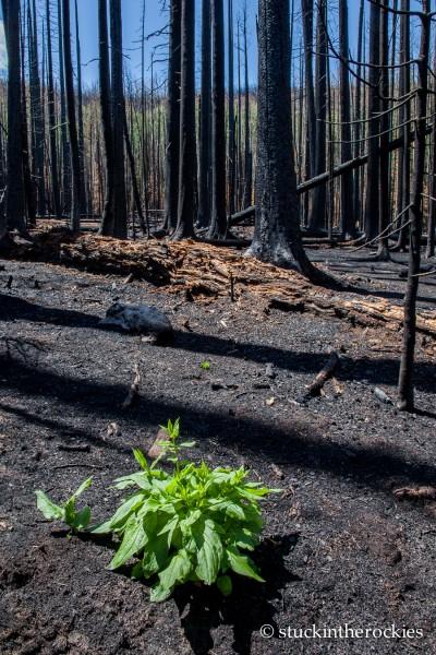 West Fork Complex Wildfire16